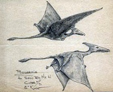 Sketch of two long-tailed pterosaurs that were seen in Cuba (Gitmo)