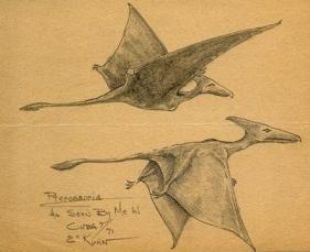 "1971 sketch of the two ""pterodactyls"" observed by the Marine Eskin Kuhn"