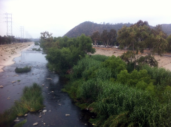 "trees, bushes, and grass in the Los Angeles River, just east of Griffith Park - here three ""dragons"" were observed in 2013"